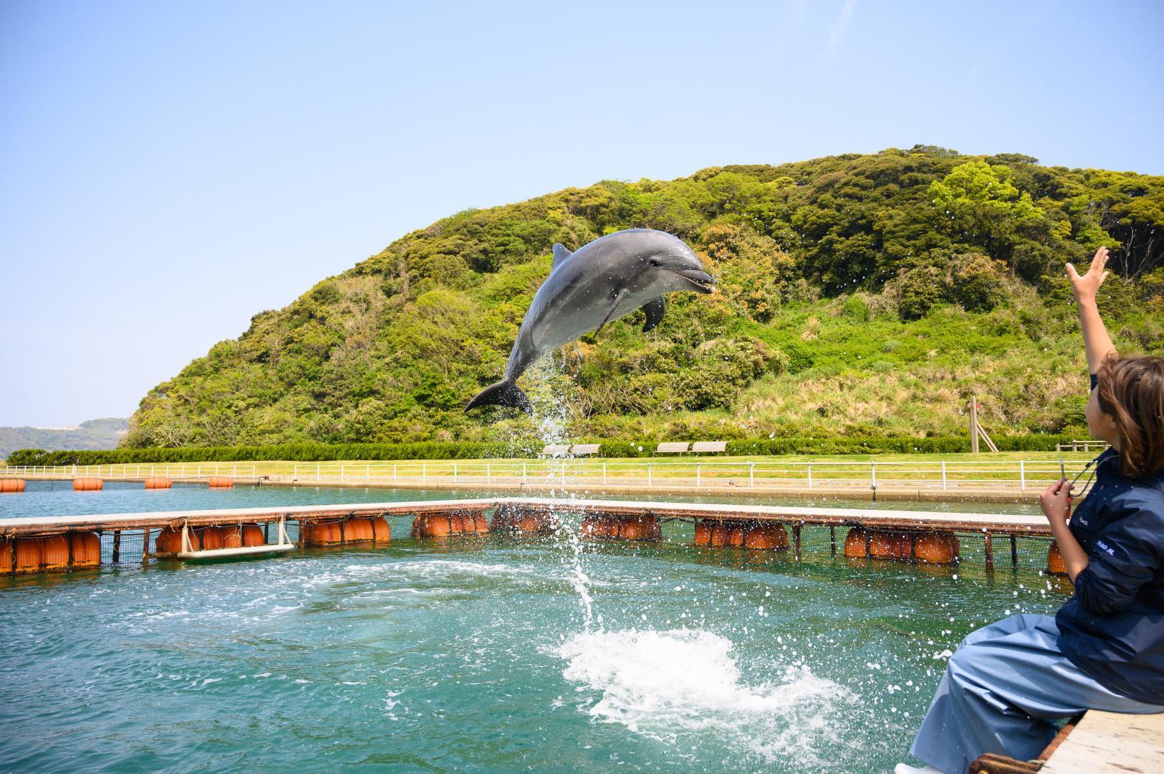 イルカと直に触れ合える!壱岐イルカパーク&リゾート