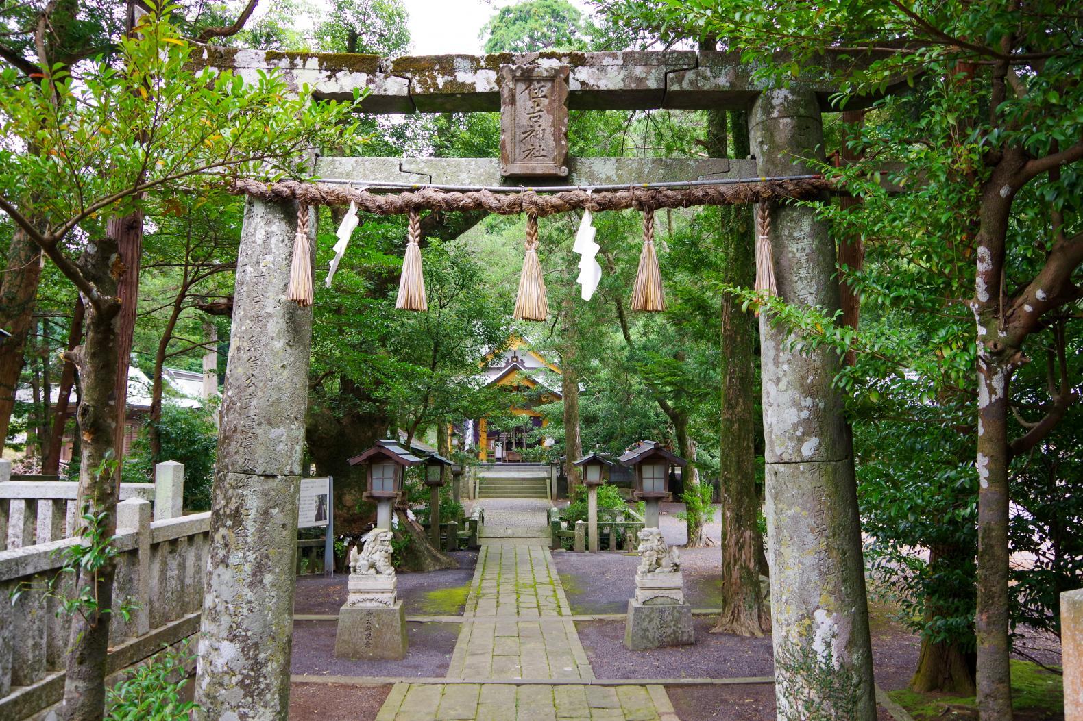 願い事を叶える「住吉神社」の夫婦楠-0
