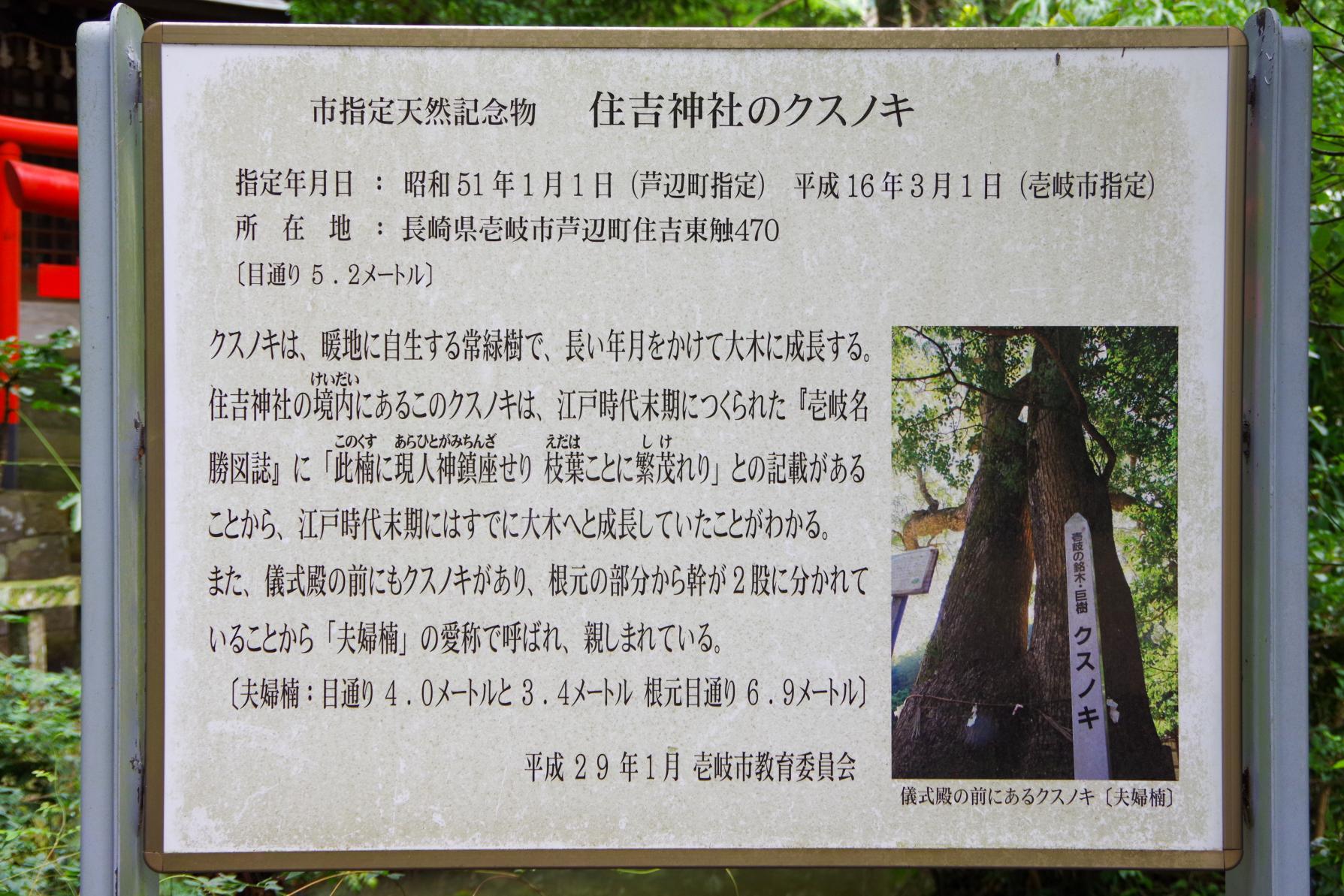願い事を叶える「住吉神社」の夫婦楠-5