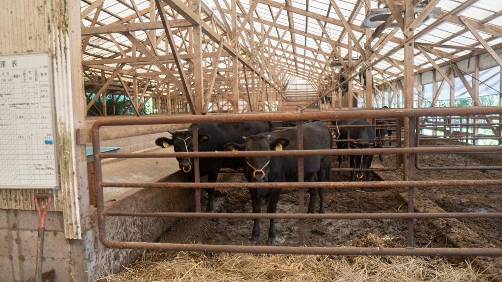 年間900頭しか出荷されない「壱岐牛」とは-2