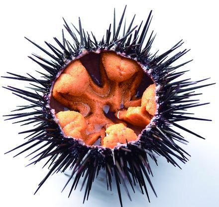 食べて・買って・体験して、絶品!壱岐島のウニを満喫しよう-1