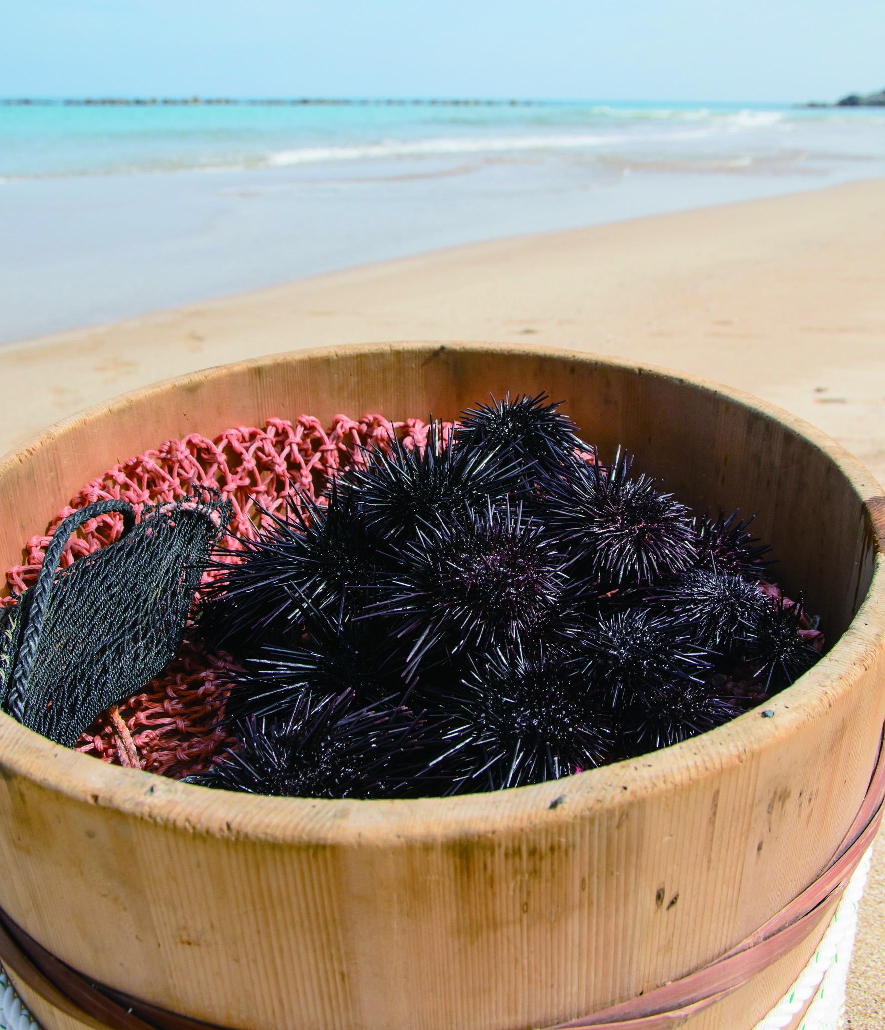 食べて・買って・体験して、絶品!壱岐島のウニを満喫しよう-0