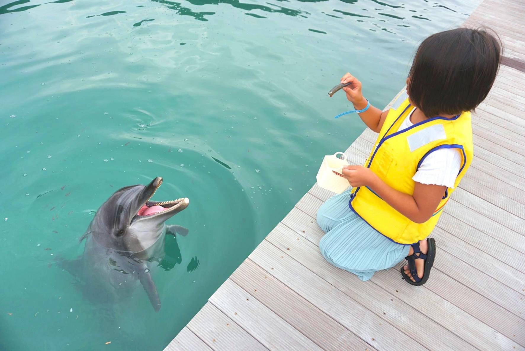 実際に体験してみた!イルカにごはん-2