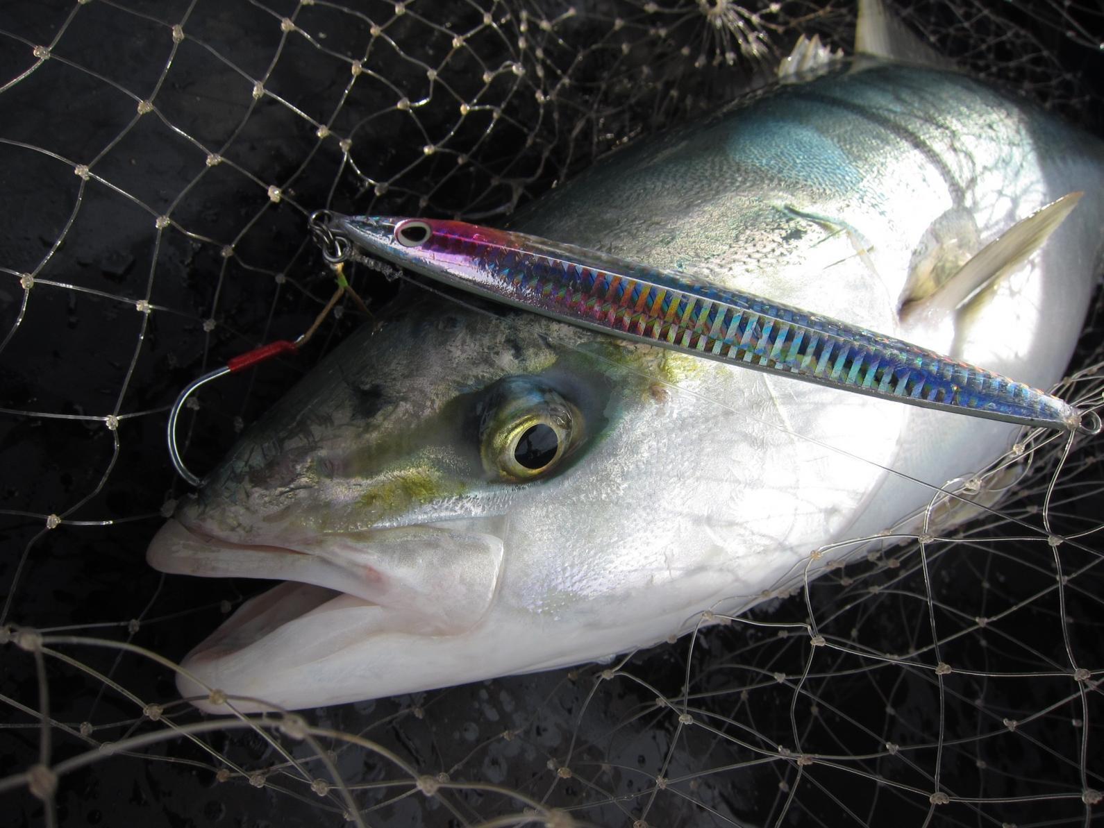 壱岐は釣り人の聖地-2