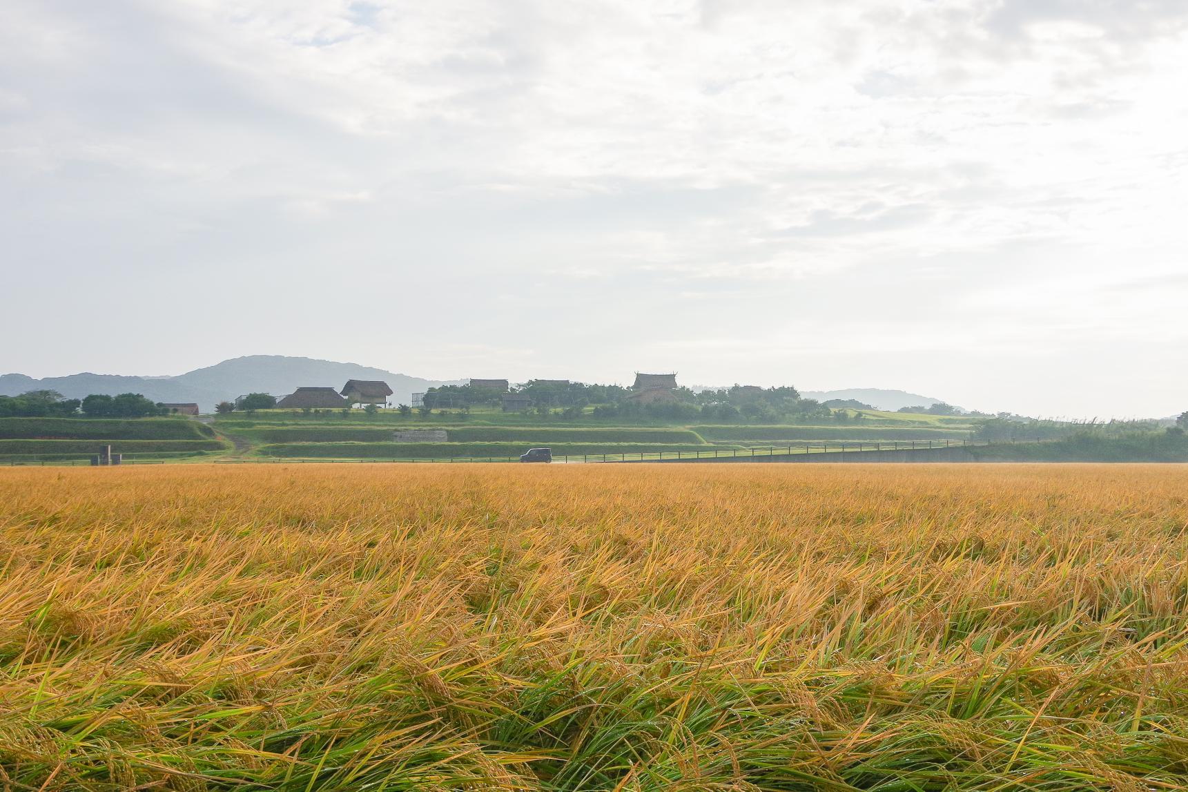 原の辻一支国王都復元公園の周囲に広がる豊かな田園風景