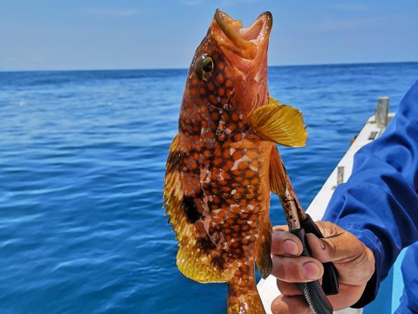 船釣り体験(勘八)-3