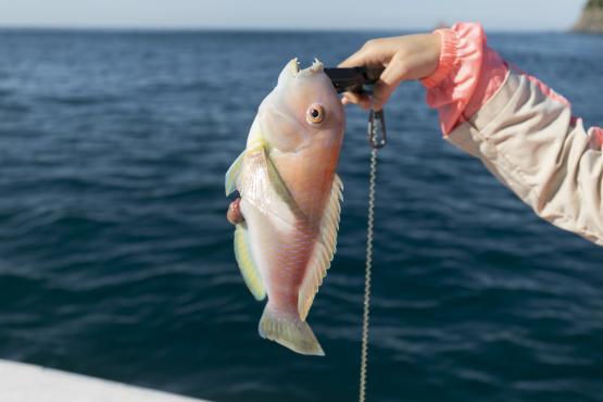 船釣り体験(勘八)-2